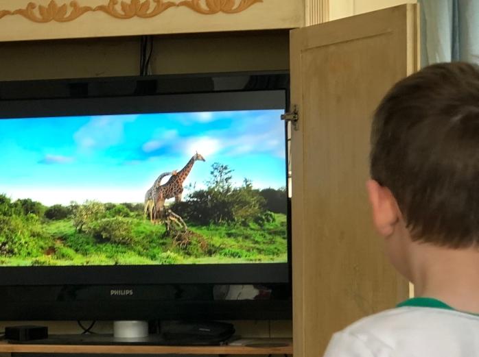 watching safari